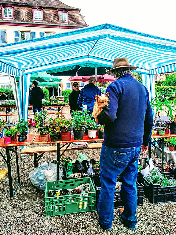 Avolsheim_foire_aux_plantes_fleurs_blumen_kaufen_pflanzen
