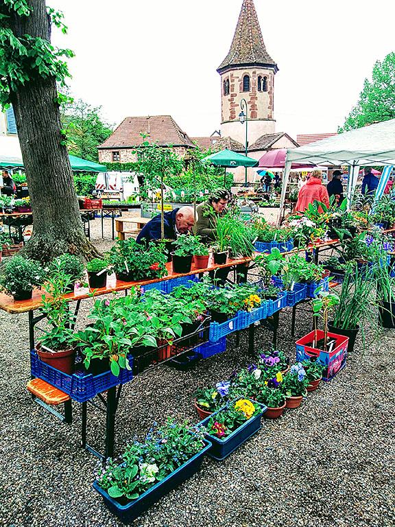 Avolsheim_foire_aux_plantes_fleurs_blumen_kaufen_pflanzen_elsass_alsace