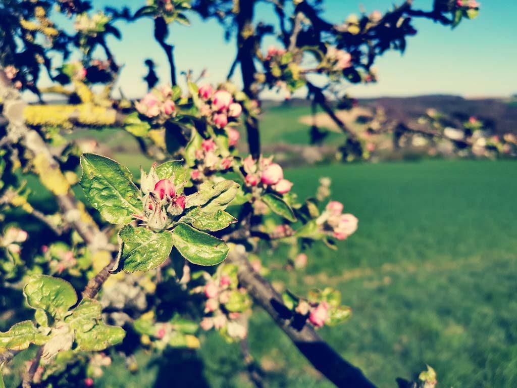 Ostertal Obstbaumwiesen Sankt Wendel Saarland Wanderung